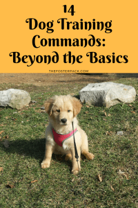 14 Dog Training Commands: Beyond the Basics