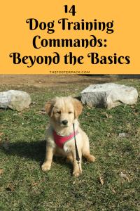 14 Dog Training Commands: Beyond the Basics