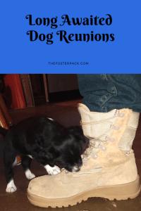 Long Awaited Dog Reunions