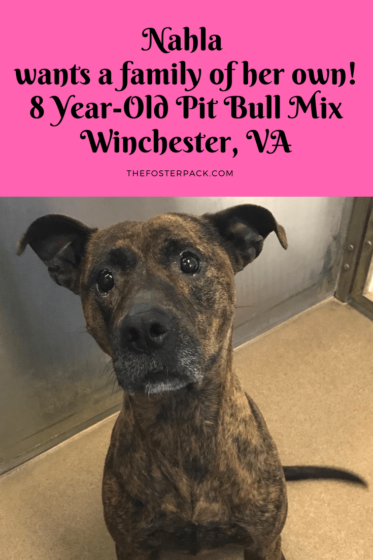 Nahla wants a family of her own! 8 Year-Old Pit Bull Terrier Mix
