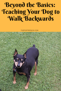 Teaching Your Dog to Walk Backwards