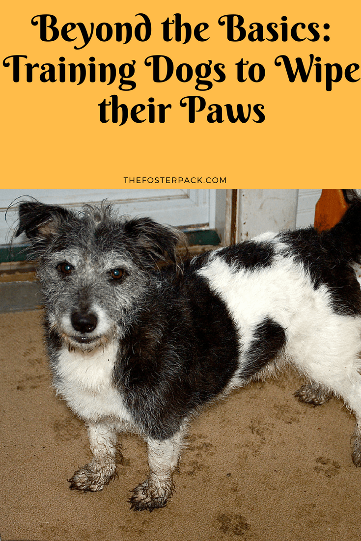 Beyond the Basics: Training your dogs to wipe their paws