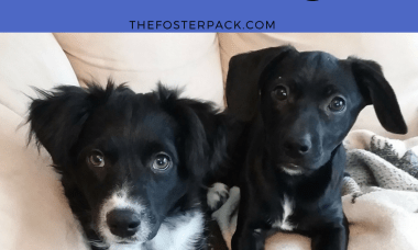 Lucky's puppies 16 weeks
