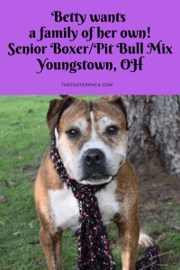 Betty, Senior Boxer Pit Mix