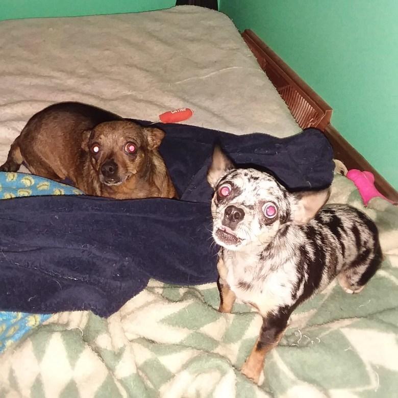 Dotty protecting her mama, Chiquita.