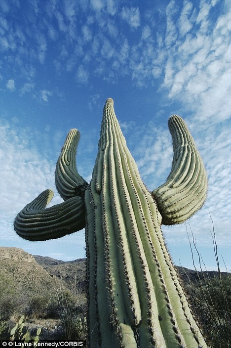 Man killed by Cactus