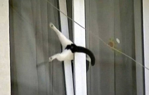 cat stuck in window