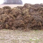 Man with cow manure fetish jailed