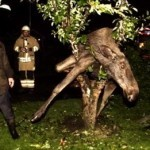Drunk Moose Found in Tree
