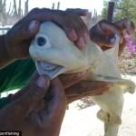Albino Cyclops Shark found