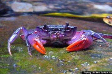weird bizarre animals