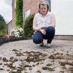 Seaweed rains on English village
