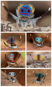 amazing coloured spiders