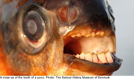 freaky news fish