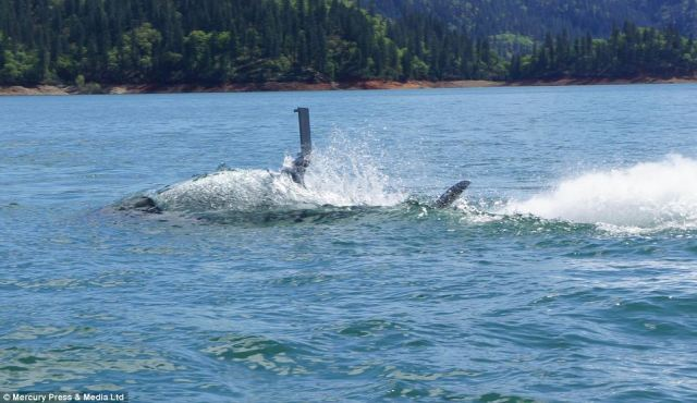 shark boat2