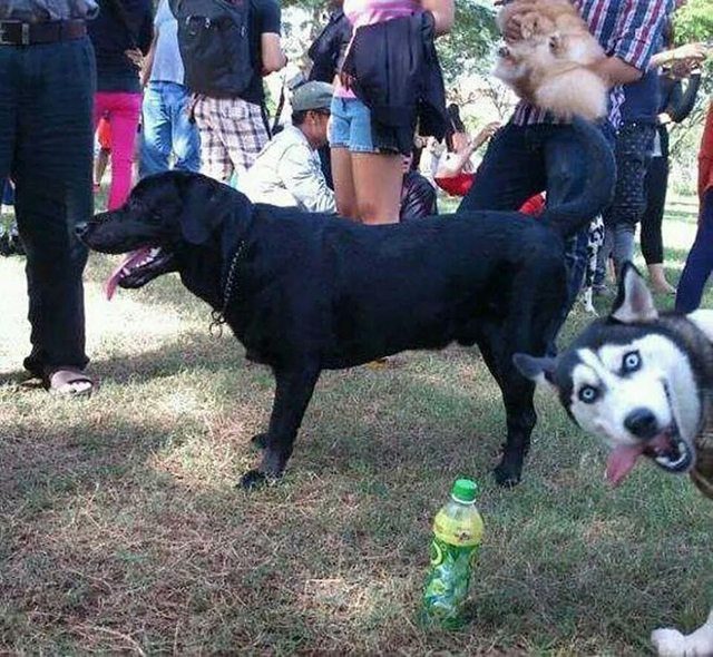 animal photobomb