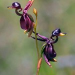 5 Orchids That Look Like Animals