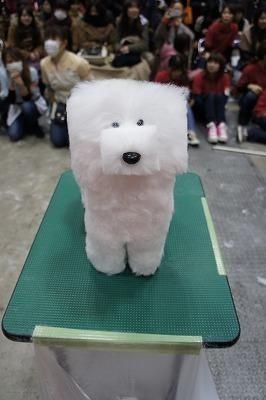 strange minecraft dog