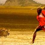 Man vs Lion
