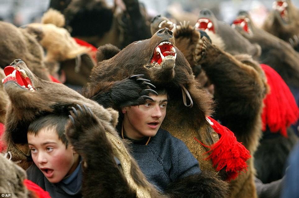 bear festival strange