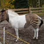 5 Real-life animal hybrids