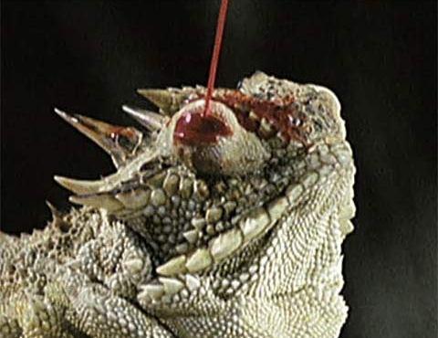 weird lizard blood