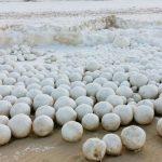 Strange Sea Snowballs