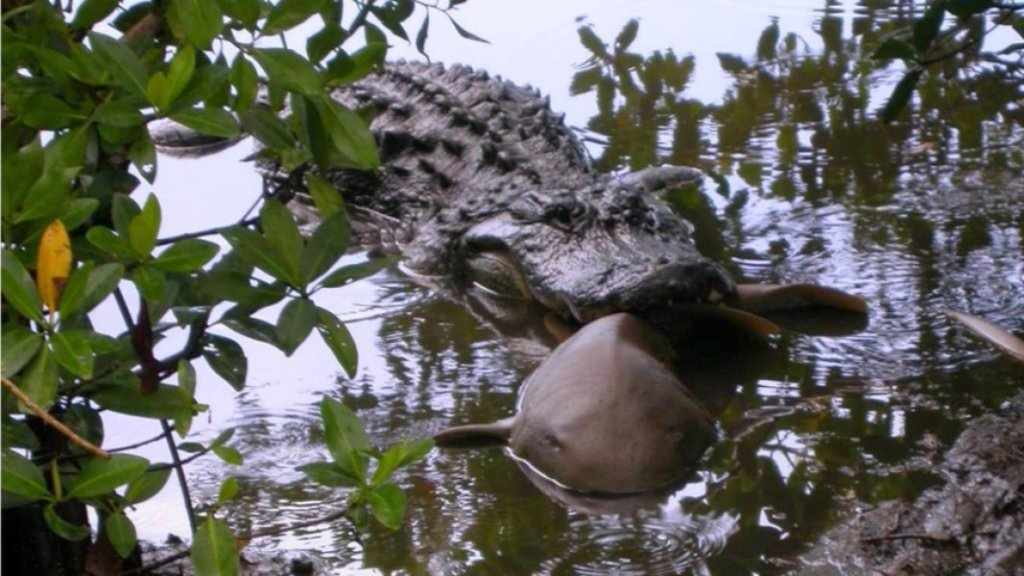 alligator weird nature
