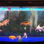 Man dies drinking fish tank cleaner he thought would cure him of Covid