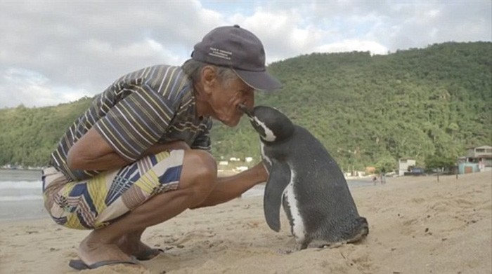 penguin and human friendship