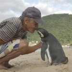 The unlikely bromance between a Penguin and a Brazilian bricklayer.