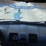 Bright Blue Dogs Discovered in Russia