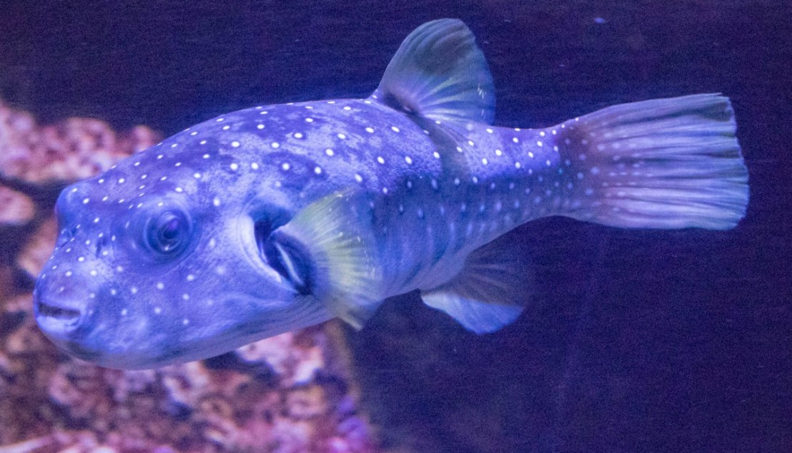 Honolulu Aquarium - Salt Water Fish