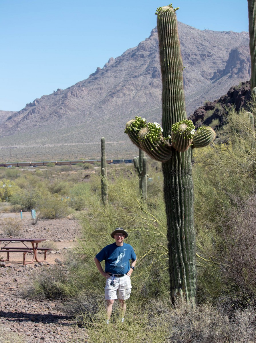 Saguaro Cactus Heights