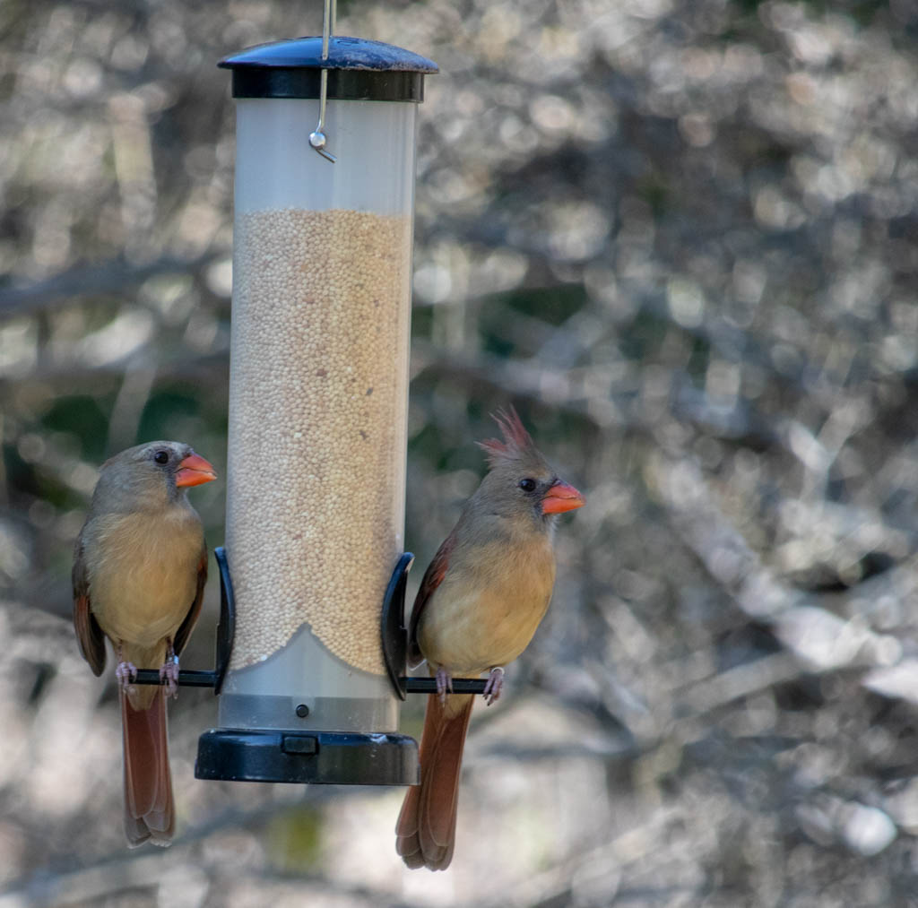 Bird Blind Feeding Station