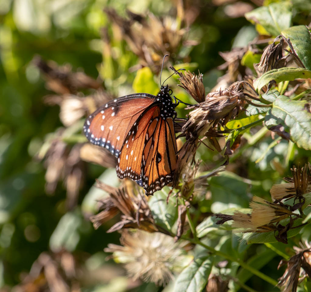 Butterfly Garden With Butterfly