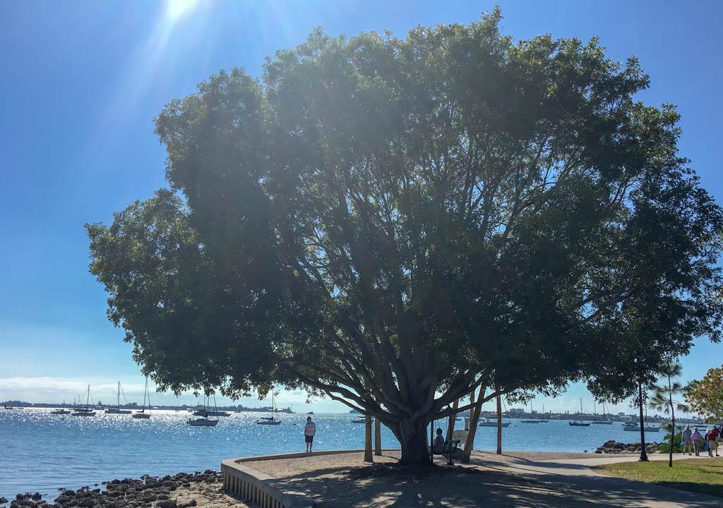 Bayfront Park Ocean View