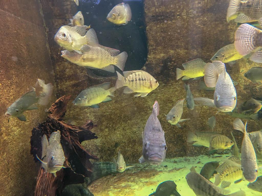 Fish in Crocodile and Alligator Habitat