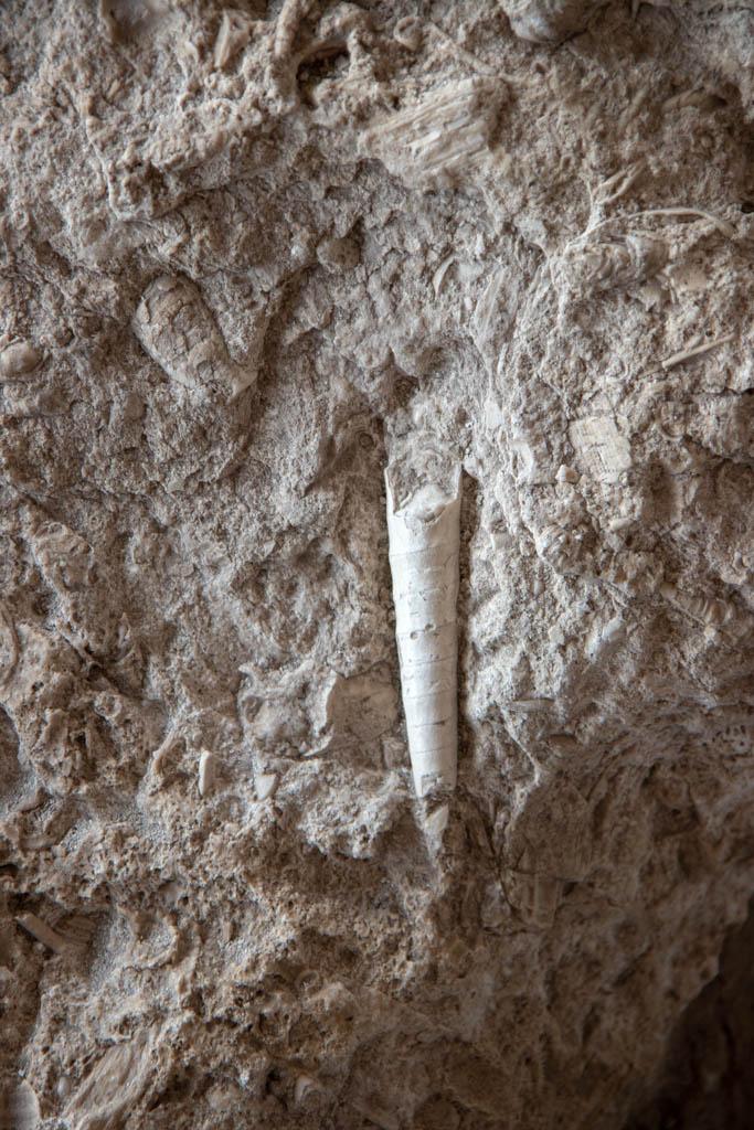 Ocean Animal Fossils