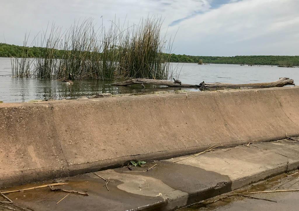 Eye Level Critters Staring While Bobbing In Lake