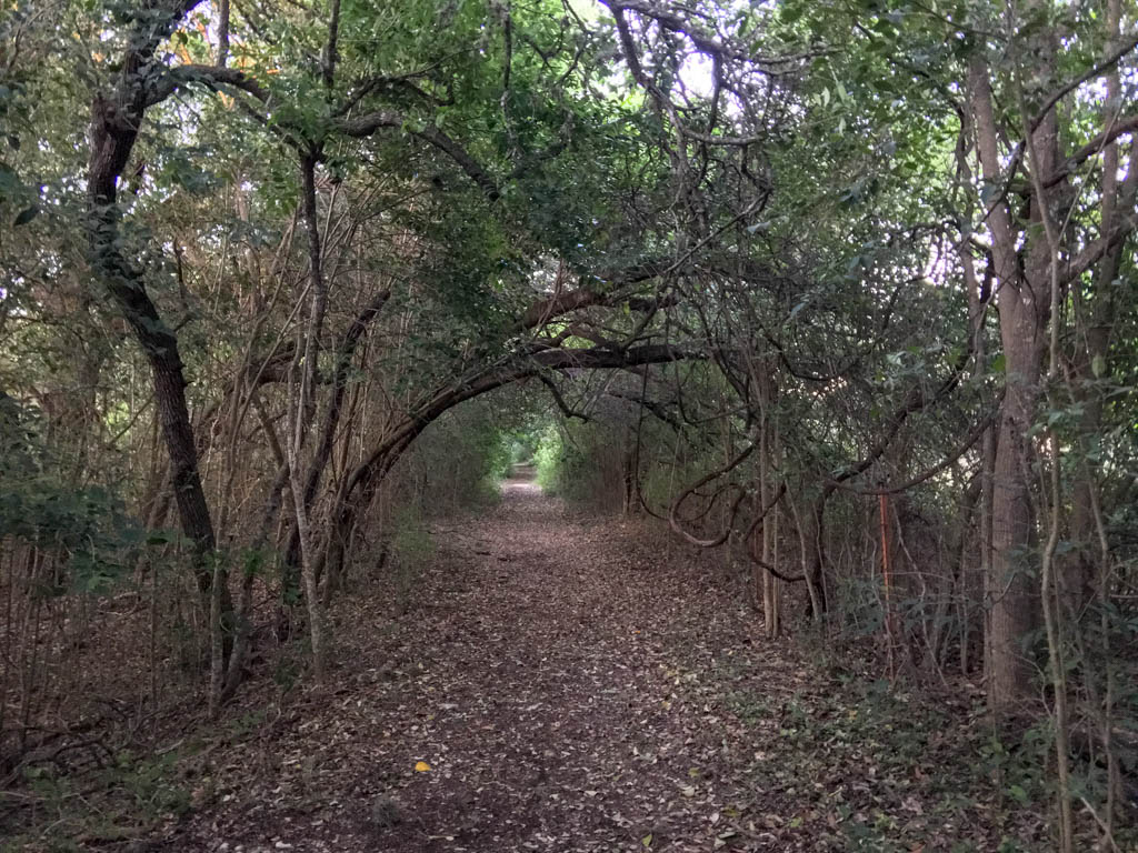 Middle Section of Caswell Nature Trail in Blanco State Park