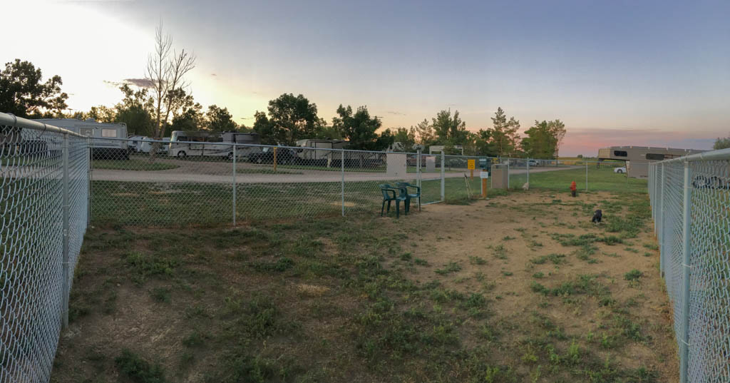 Morning At The Dog Park