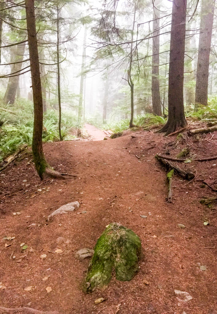Foggy Forest Along Fragrance Lake Trail