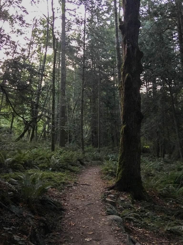 Clayton Beach Trail Dawn