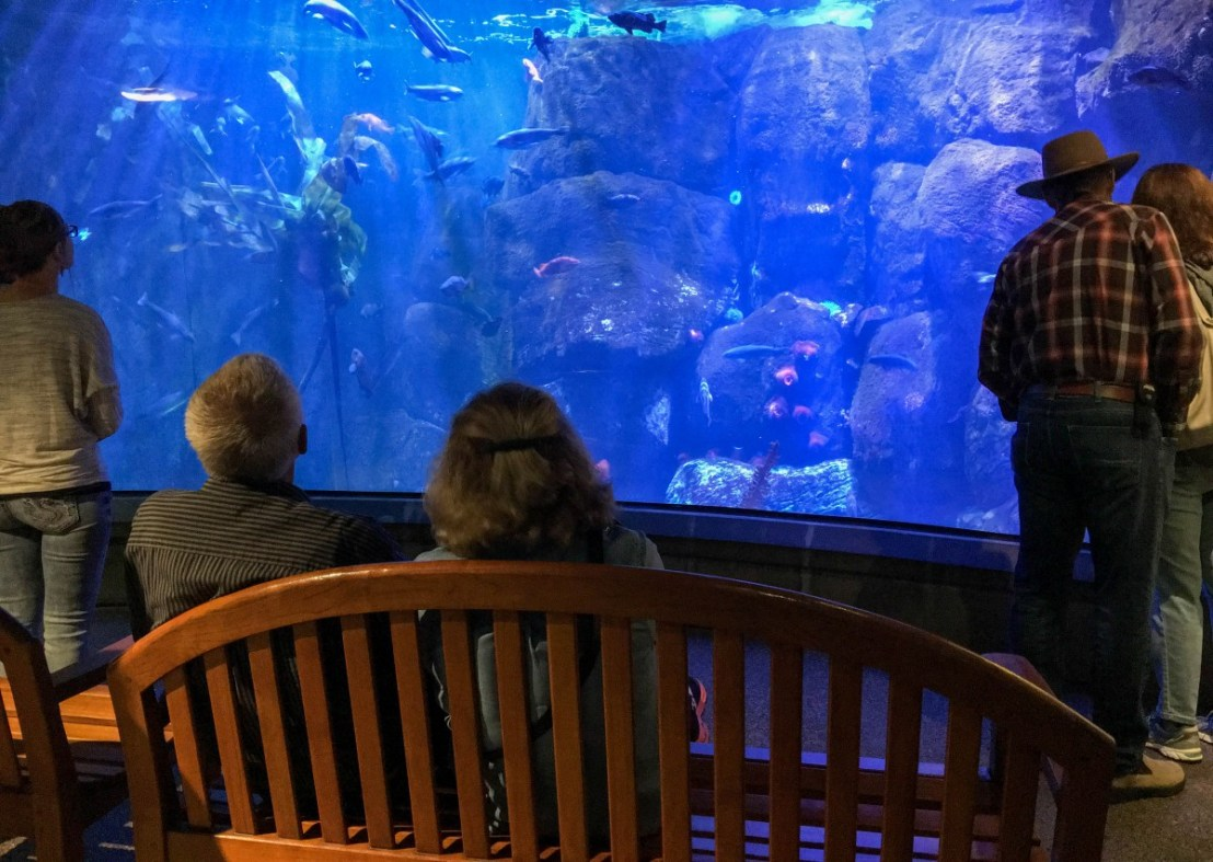 Coastal Waters Display
