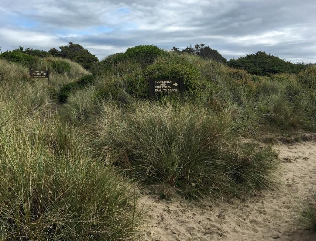 Trails Through The Dunes