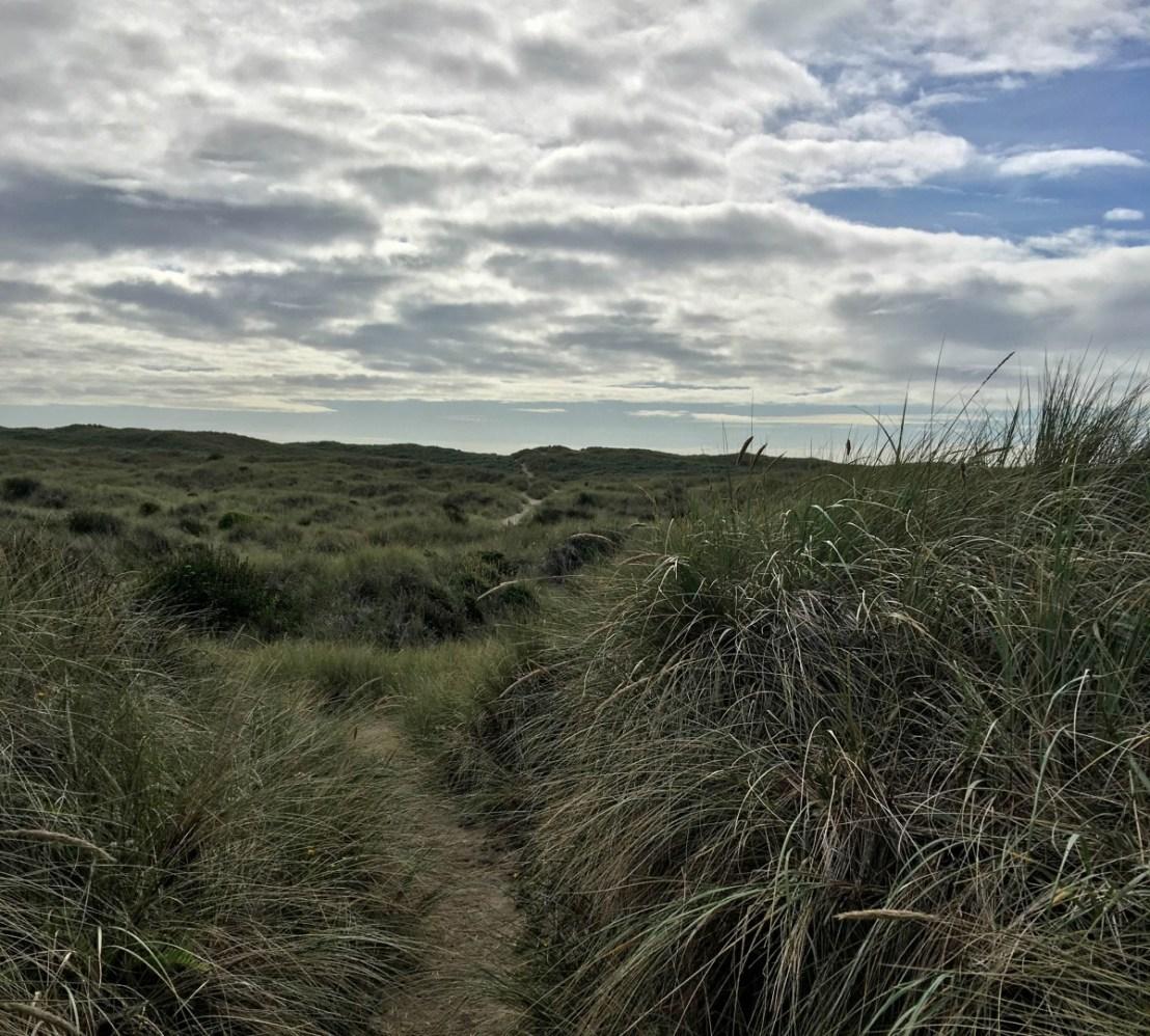 More Trails Through More Dunes