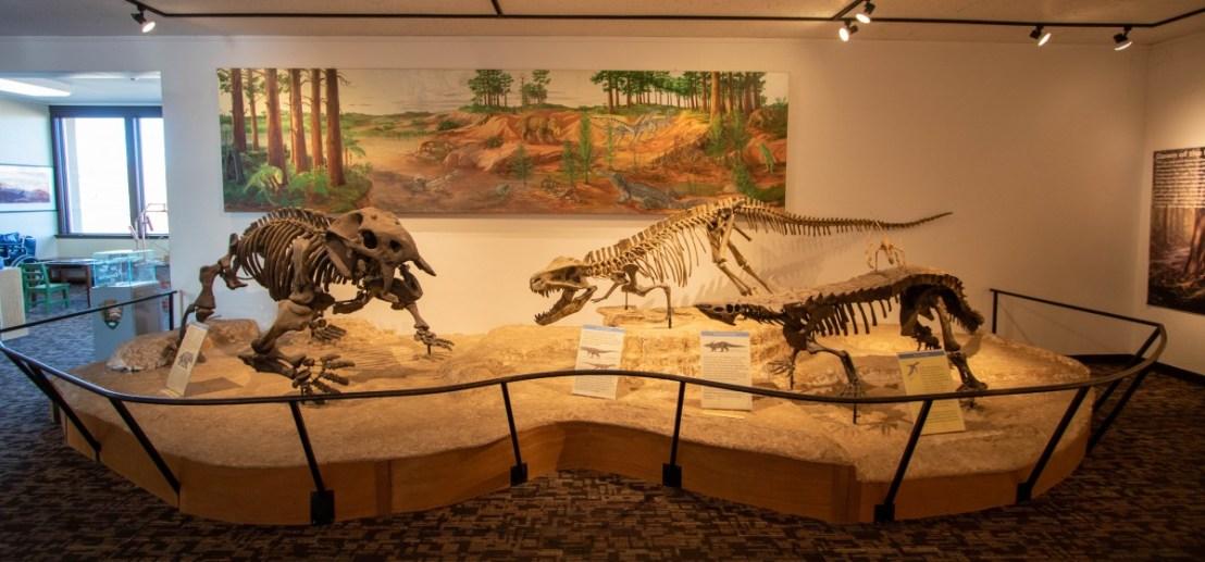 Dinosaur Bones/Fossils
