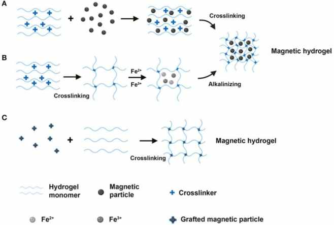 magnetic hydrogel formation
