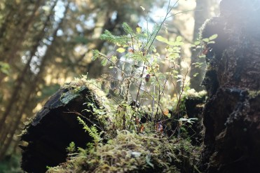 fairy tale forest photography of moss and a tiny tree in the sunlight